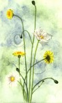Dandelions and Daisies.
