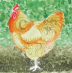 Buff Orpington Rooster.