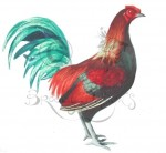 Old English Game Bantam Rooster.